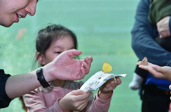 被赞美的生命 国庆必看北京首届昆虫艺术科普展