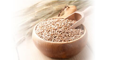 帝人新升级功能型大麦、倡导膳食生活健康习惯